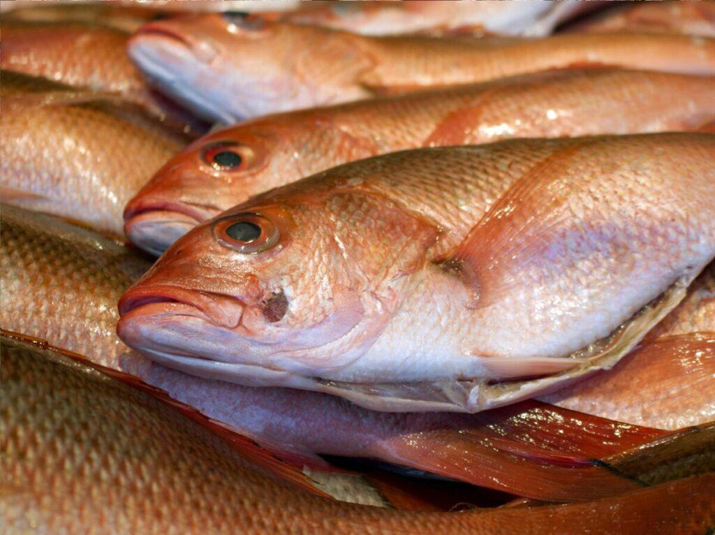 comprar peixe